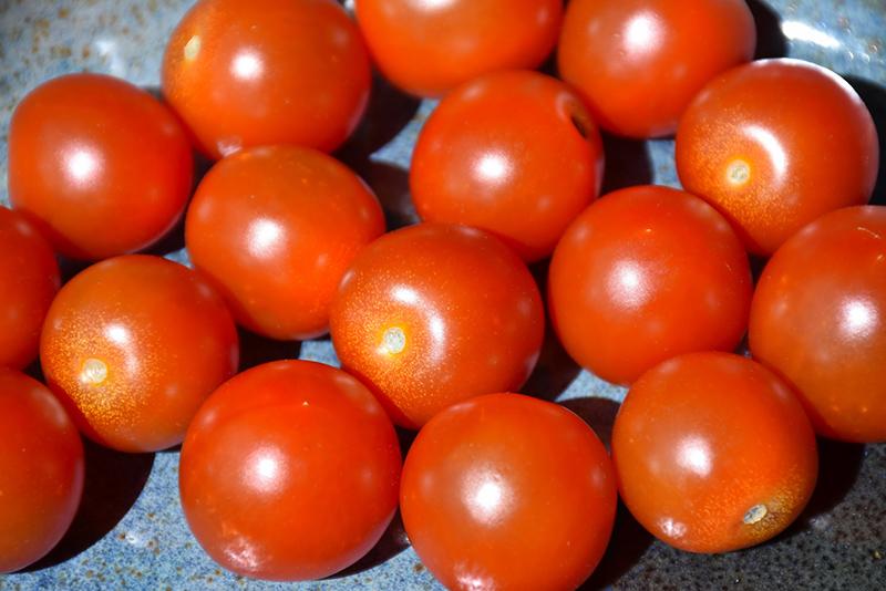 Sweet 100 Tomato (Solanum lycopersicum 'Sweet 100') at Pesche's Garden Center