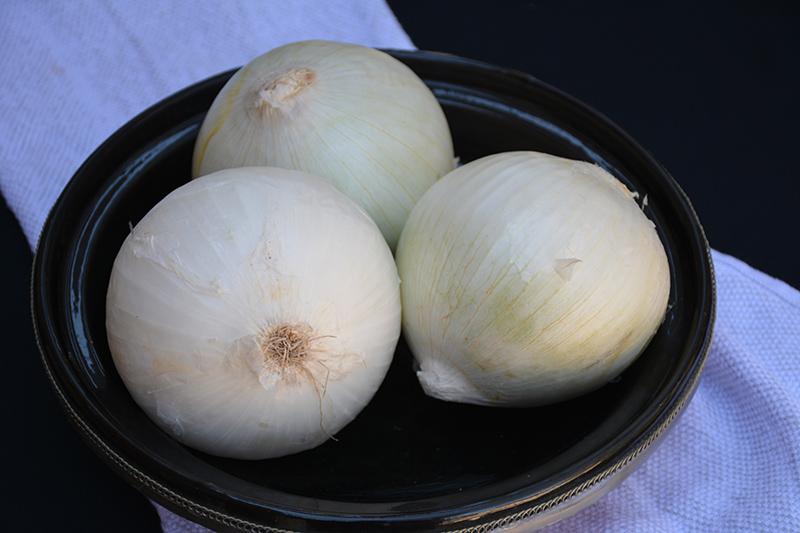 White Sweet Spanish Onion (Allium cepa 'White Sweet Spanish') at Pesche's Garden Center