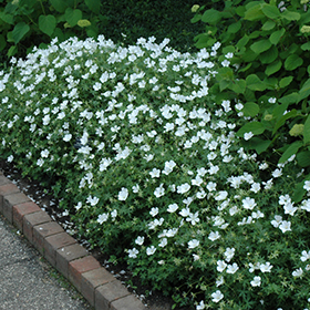 Plant Photo 4